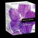 Концентрированный бесфосфатный стиральный порошок  «Royal Powder Professional» (1кг)